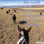 Horse Quote Feature