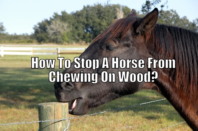 horse chewing on wooden post