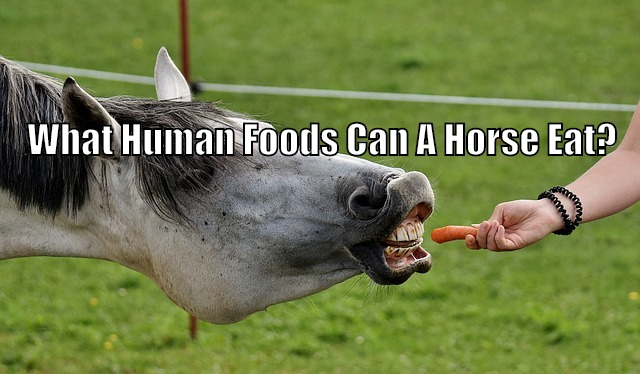 what human foods can horse eat