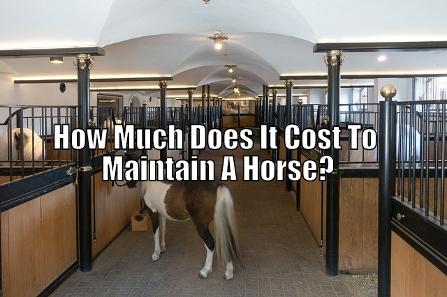 maintaining horse