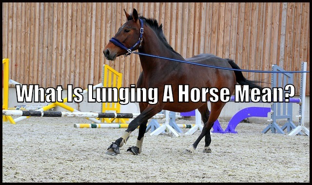 horse lunging